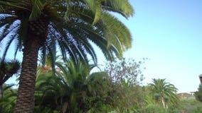 Donne che camminano nel parco tropicale stock footage