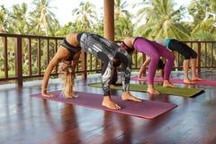 Donne che fanno yoga di Chakrasana, posa della ruota Fotografie Stock