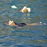 Donne che navigano usando una presa d'aria Fotografia Stock Libera da Diritti