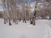 Donne che snowshoeing Fotografie Stock