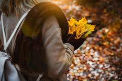 Donne che tengono mazzo delle foglie di acero gialle di autunno in sue mani gloved Il terreno coperto di arancia lascia il lighte Immagine Stock