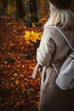 Donne che tengono mazzo delle foglie di acero gialle di autunno in sue mani gloved Terreno coperto di lightend dorato delle fogli Immagini Stock Libere da Diritti