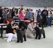 Donne con i cani Immagine Stock