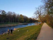 Donne con i cani sulla riva di Wiese fotografia stock libera da diritti