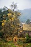 Donne con il fondo dorato delle foglie immagini stock