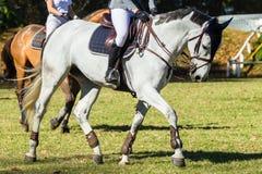 Donne dei cavalli dei cavalieri Immagini Stock Libere da Diritti