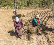 Donne del Bhutanese sul campo Fotografie Stock Libere da Diritti