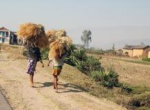 Donne del Madagascar che portano le pile di fieno Immagine Stock Libera da Diritti