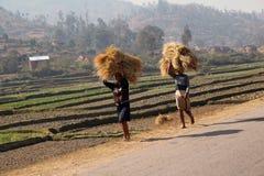 Donne del Madagascar che portano le pile di fieno Fotografie Stock
