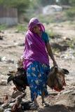 Donne del venditore del gallo Immagine Stock