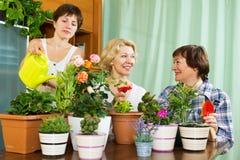 Donne e ragazza che prendono cura delle piante Fotografie Stock