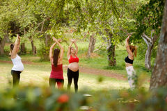 Donne incinte che fanno yoga con l'istruttore personale In Park Fotografia Stock Libera da Diritti
