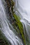 Donner-Fluss-Moos Stockbilder