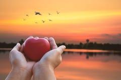 Donner l'amour et le concept de valentine, main tenant le coeur rouge sur le soleil photographie stock