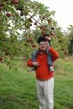 Donner la pomme au papa image stock