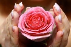 Donner une rose. La main du femme Images stock