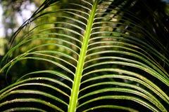 Donnez à l'effet une consistance rugueuse des feuilles de palmier photographie stock libre de droits