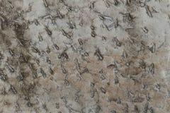 Donnez au fond une consistance rugueuse sale de marbre de Brown extérieur photos stock