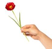 Donnez la fleur Photos libres de droits