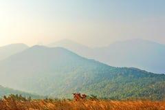 Donnez sur les montagnes floues Photographie stock