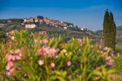 Donoratico, Castagneto Carducci Livorno, Tuscany, - Obraz Royalty Free