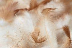 Donsachtige die achtergrond van kippenveren wordt gemaakt Stock Foto
