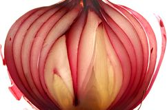 Dont Cry. Organically grown Red Onion sliced thinly and backlit royalty free stock photos