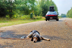 Dont leave the dog!. Dog left behind while it's owners leave for vacations Stock Image