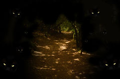 Dont leave path. Spooky eyes watching from darkness along woodland path Royalty Free Stock Image