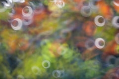 Donut rings Bokeh background Stock Photo