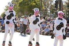 Doo Dah Skating Cows Royalty Free Stock Photo