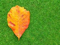 Dood blad op groen gras stock afbeeldingen