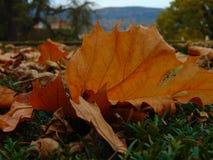 Dood blad ter plaatse in het kasteelpark van Cesky Krumlov Royalty-vrije Stock Afbeelding