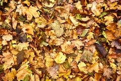 Dood bladeren geschoten ideaal voor achtergronden stock fotografie