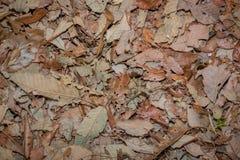 Dood bladeren geschoten ideaal voor achtergrondtexturen stock afbeelding