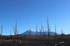 Dood Bos, Tolbachik-vulkaan Stock Foto