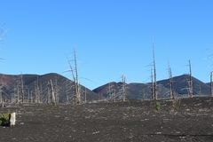 Dood Bos, Tolbachik-vulkaan Stock Afbeelding