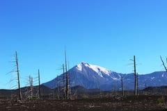 Dood Bos, Tolbachik-vulkaan Stock Afbeeldingen