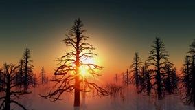 Dood bos in water en de zon stock illustratie