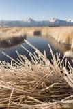 Dood de wintergras van de vorstdekking in de Vallei Sierra Nevada van Owen ` s Stock Fotografie