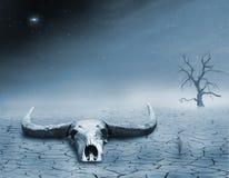 Dood in de woestijn Royalty-vrije Stock Fotografie