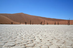 Dood in de Woestijn Namib stock afbeeldingen