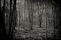 Dood Forest Black en Witte Aardachtergrond Stock Afbeeldingen