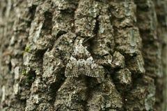 Dood-hoofd camouflage stock afbeelding
