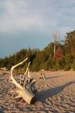Dood hout op de kust Royalty-vrije Stock Foto's