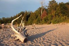 Dood hout op de kust Royalty-vrije Stock Afbeeldingen