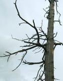 Dood-hout op donkere achtergrond Royalty-vrije Stock Fotografie