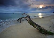 Dood hout op een strand Stock Foto