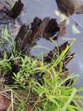 Dood houten en groen gras Royalty-vrije Stock Afbeelding