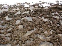 Dood koraal Royalty-vrije Stock Foto's